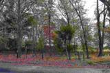 TBD Lot #1 County Road 4114 - Photo 9