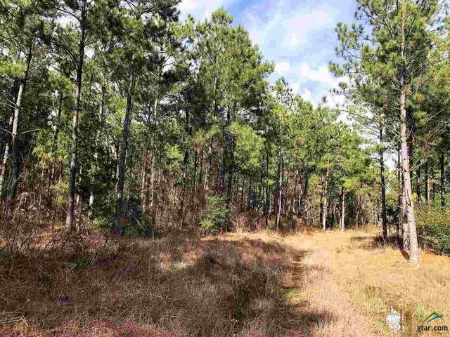 TBD Fm 2274, Troup, TX 75789 (MLS #10123862) :: The Wampler Wolf Team