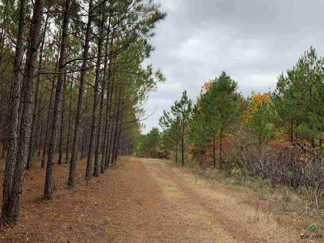 ABC County Road 2303, Lone Star, TX 75668 (MLS #10113501) :: The Wampler Wolf Team