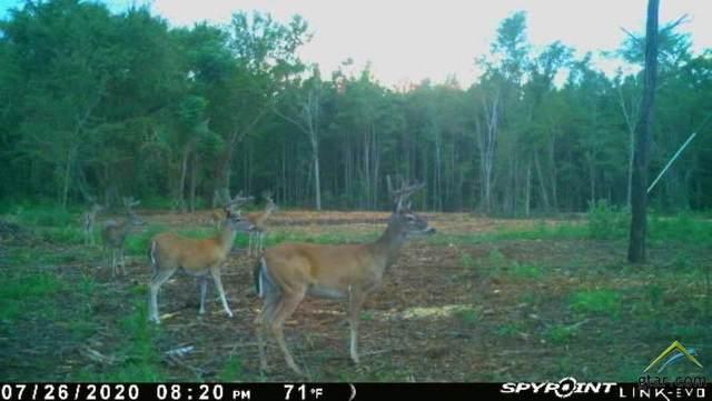 11654 Cr 3100, Winona, TX 75706 (MLS #10126924) :: The Wampler Wolf Team