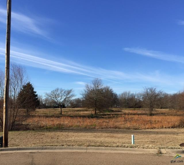 Lot 21 Blue Heron Circle, Mt Pleasant, TX 75455 (MLS #10051055) :: Griffin Real Estate Group
