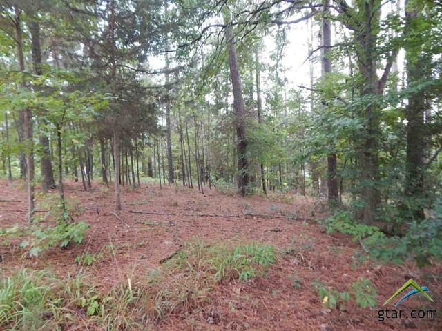 Lot 34, 35 Bob White Drive, Gilmer, TX 75645 (MLS #10099800) :: The Wampler Wolf Team