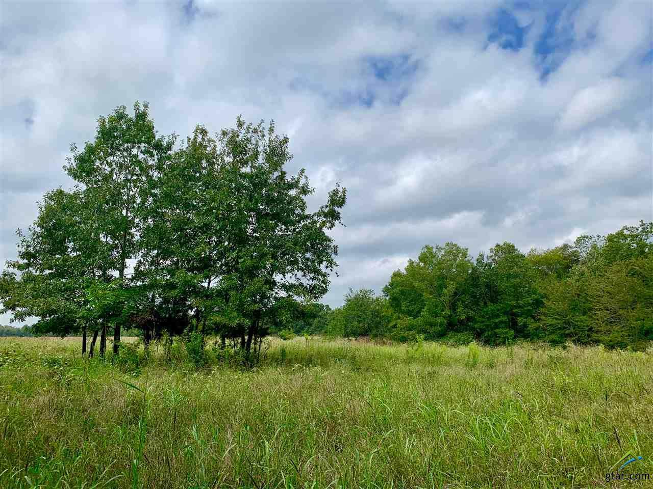 Tract 1 County Road 1350 - Photo 1