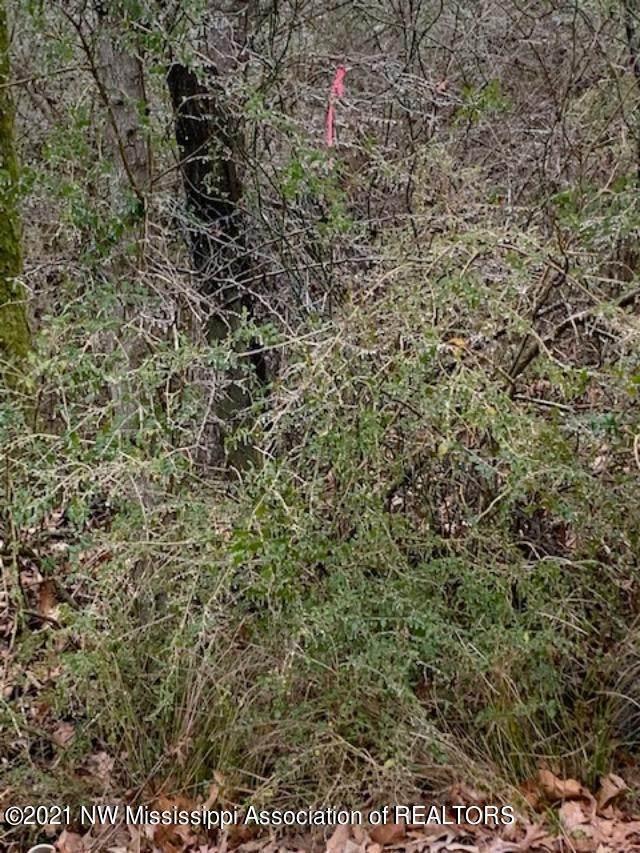 0 0 Polk Lane, Olive Branch, MS 38654 (MLS #2334628) :: Signature Realty