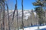 3990 Bellyache Ridge - Photo 17