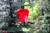 4580 Aspen - Photo 40