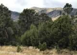 320 Ward Mountain - Photo 3