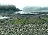 File#1406265 Plumper Harbour - Photo 8