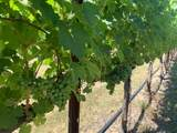 00 Rock Bottom Vineyard - Photo 5