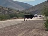 8909 White Hills Road - Photo 3