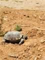 2707 Tortoise - Photo 39
