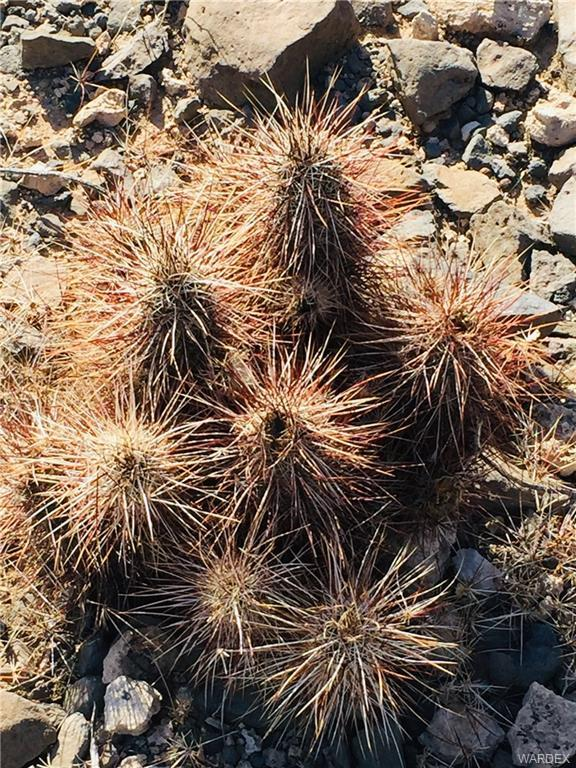 000 S Tortoise, Yucca, AZ 86438 (MLS #955914) :: The Lander Team