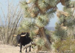 0000 NE Carrow, Yucca, AZ 86438 (MLS #957542) :: The Lander Team