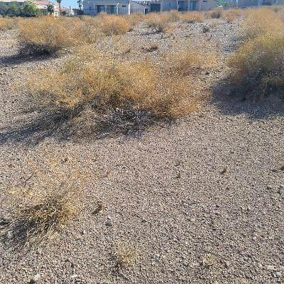 3429 Landon E Drive, Bullhead, AZ 86429 (MLS #984558) :: AZ Properties Team   RE/MAX Preferred Professionals