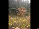 78 Oak Wood Dr - Photo 66