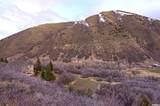 238 Hobble Creek Canyon Rd - Photo 2