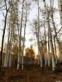 2488 Forest Cir - Photo 1