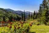 182 White Pine Canyon Rd - Photo 72