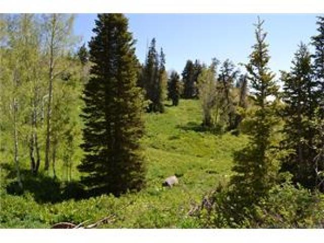 1732 Alexander Cyn, Wanship, UT 84017 (MLS #1503659) :: High Country Properties