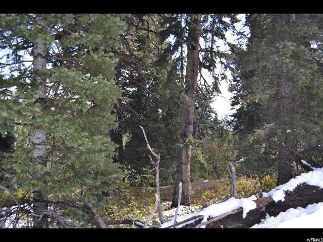 900 Deep Forest Rd, Wanship, UT 84017 (MLS #1530035) :: High Country Properties