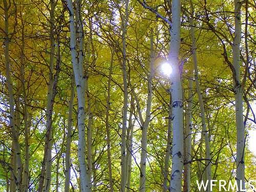 2381 Westview Dr - Photo 1
