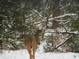 6274 Whispering Lake Drive - Photo 21
