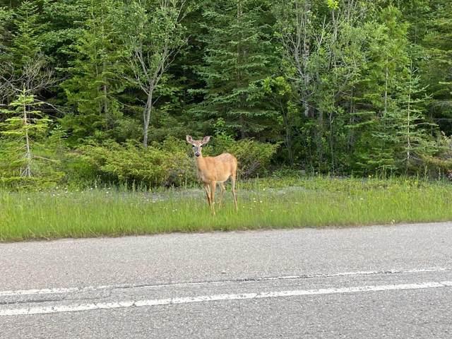 E Grand Lake Road, Presque Isle, MI 49777 (MLS #201810371) :: CENTURY 21 Northland