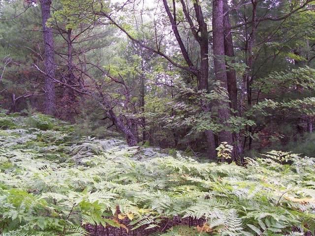 828 Beaver Trail, Wolverine, MI 49799 (MLS #201810959) :: CENTURY 21 Northland