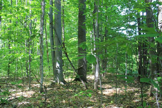 N Sunshine Trail, Vanderbilt, MI 49795 (MLS #322250) :: CENTURY 21 Northland