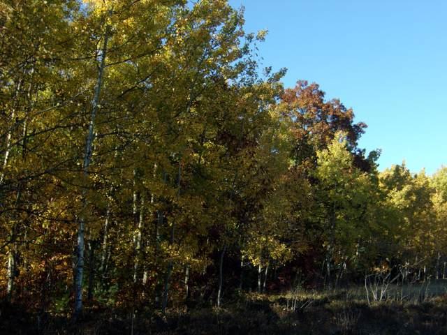 M-68, Indian River, MI 49749 (MLS #322528) :: CENTURY 21 Northland