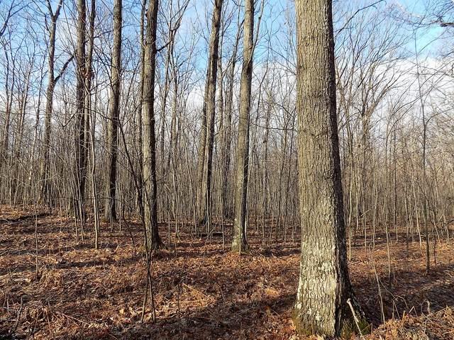 Camp Domino Trail, Comins, MI 48619 (MLS #323924) :: CENTURY 21 Northland