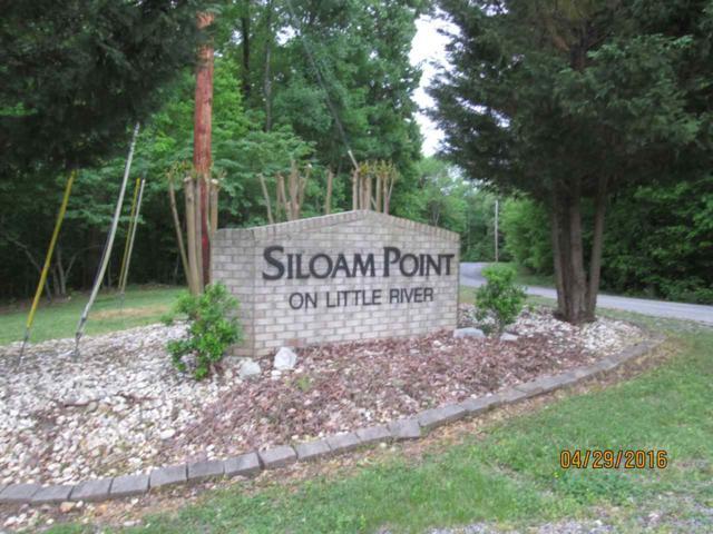 #41 Siloam Point, Cadiz, KY 42211 (MLS #86782) :: The Vince Carter Team