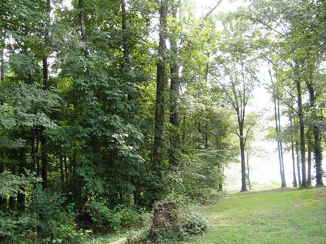 LOT 39 Cobblestone Ct, Kuttawa, KY 42055 (MLS #83549) :: The Vince Carter Team