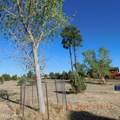 2250 Big Bear Circle - Photo 8