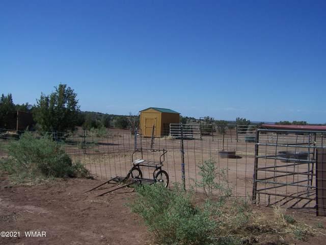 59 County Road 8562 (Mopar Blvd), Concho, AZ 85924 (MLS #235265) :: Walters Realty Group