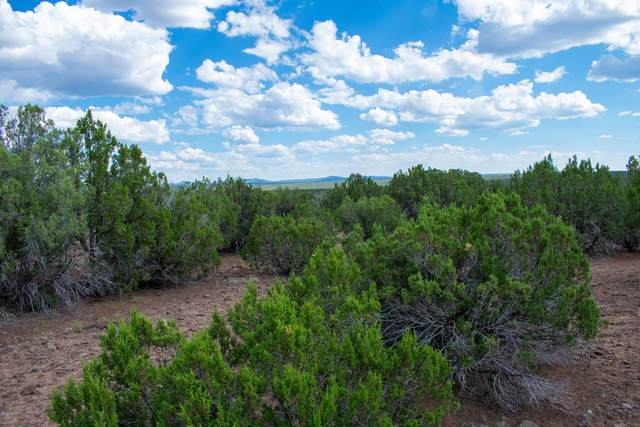 TBD Gample Lane, Show Low, AZ 85901 (MLS #231328) :: Walters Realty Group