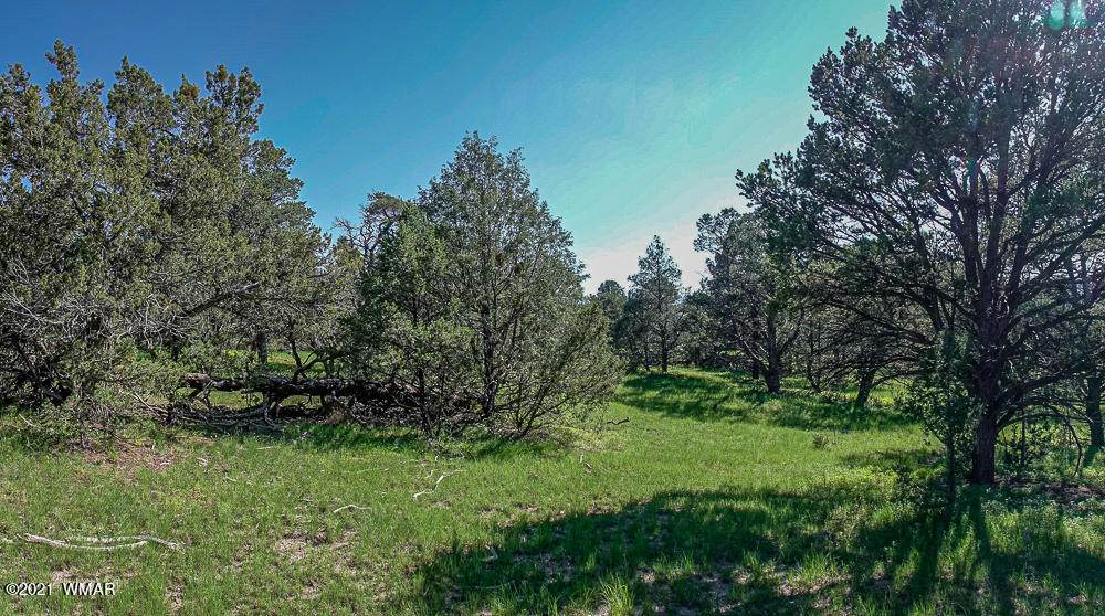 TRACT E-MM 414 Hwy 180 - Photo 1