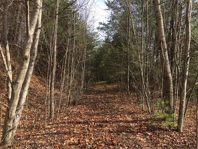 LT107 Buck Mountain Rd, Purlear, NC 28665 (MLS #64038) :: RE/MAX Impact Realty