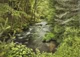 427 Woodstone Trail - Photo 30