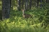 427 Woodstone Trail - Photo 33