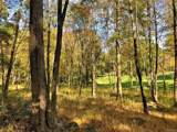 41 Fern Wood Way - Photo 9