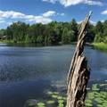 Beaver Dam Rd. - Photo 3