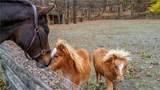 547 Bull Mill Road - Photo 3
