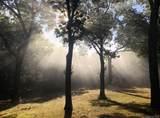 301 Green Briar Drive - Photo 32