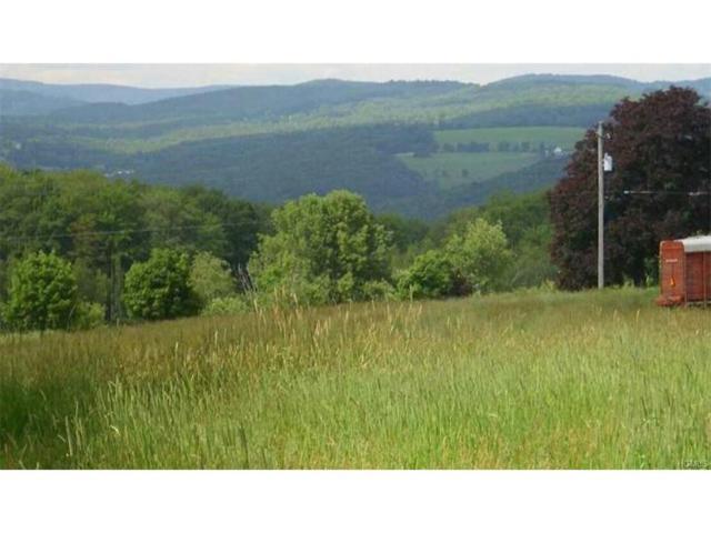 County Road 114, Cochecton, NY 12726 (MLS #4723004) :: Mark Boyland Real Estate Team
