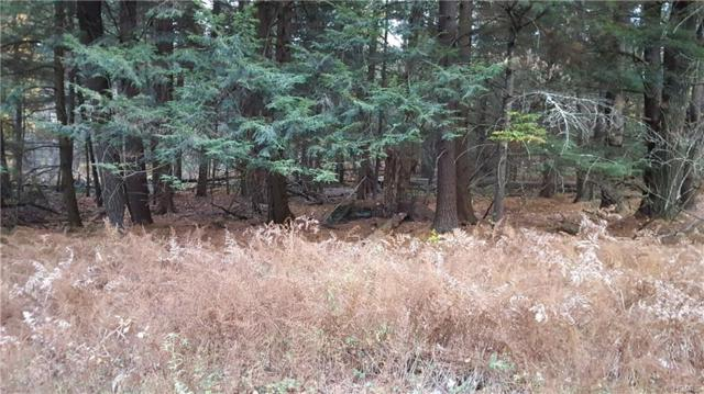 Wildcat Road, Monticello, NY 12701 (MLS #4807608) :: Mark Boyland Real Estate Team