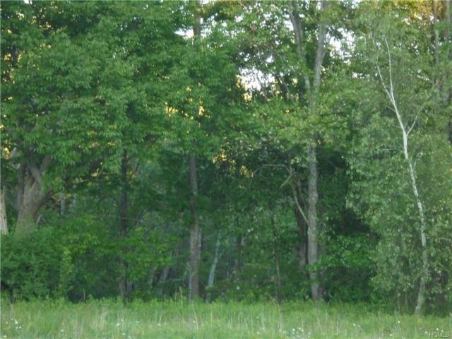 55 Beech Street, Smallwood, NY 12778 (MLS #4904255) :: Mark Boyland Real Estate Team