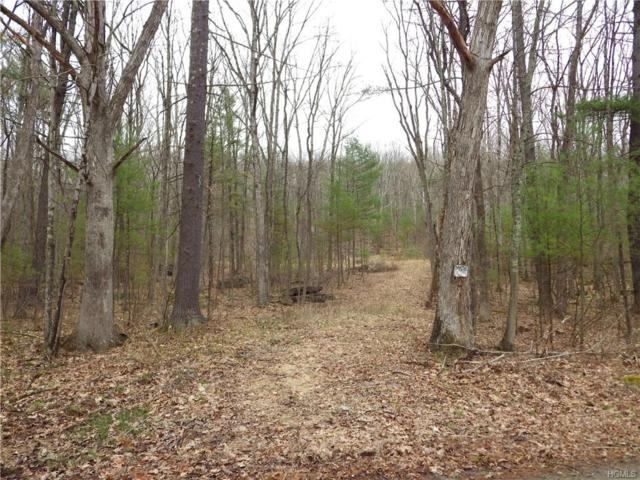 Skinners Falls Road, Cochecton, NY 12726 (MLS #4922832) :: Shares of New York