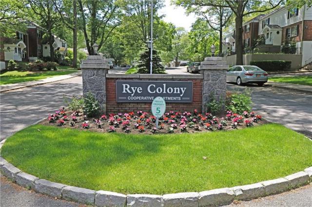 73 Peck Ave B, Rye, NY 10580 (MLS #4947989) :: William Raveis Baer & McIntosh