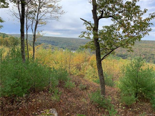Eagle View, Narrowsburg, NY 12764 (MLS #5104423) :: The McGovern Caplicki Team